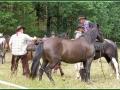 chytání koní