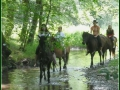 deti kone voda
