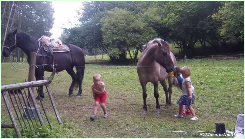 vlcata u koni